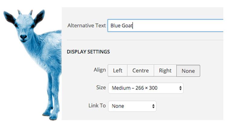 Blue-Goat