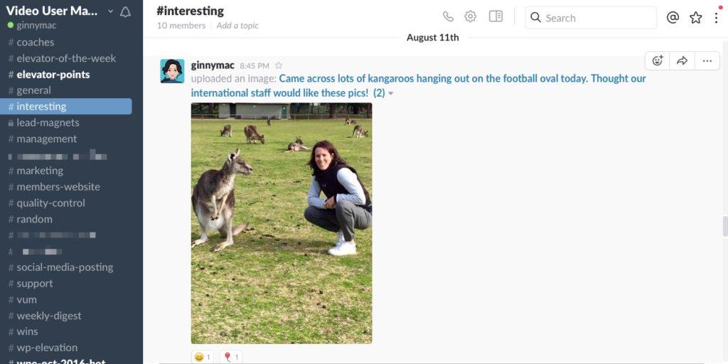 Kangaroos_Slack2